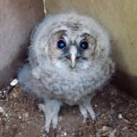 City attracts owls back to restored local forest