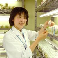 Naoko Okitsu, a researcher at the Suntory Global Innovation Center in Shimamoto, Osaka Prefecture, wants to develop the world's first deep-blue rose.   KYODO