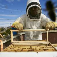 A professional beekeeper expands a beehive on the roof of a home in Los Angeles. | AP