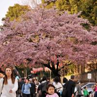 [PHOTOS] Spring begins in Tokyo with the annual pink parade of cherry blossoms