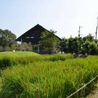 A replica of an ancient paddy field at the Nabatake Ruins in Karatsu. | WINIFRED BIRD