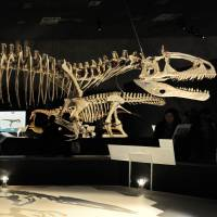 The skeleton of a Cryolophosaurus ellioti is seen at the 2009 exhibition 'Dinosaurs of Gondwana' at the National Science Museum in Tokyo. | AFP-JIJI