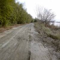 A riverside road where tons of cesium-contaminated wooden chips were found is seen in late February.  | KYODO