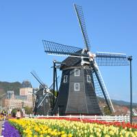Tulips are in bloom at Huis Ten Bosch during the Tulip Festival at the Dutch-themed amusement park in Sasebo, Nagasaki Prefecture. | KYODO