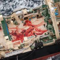 In this photo released by the anti-whaling group Sea Shepherd Australia on Jan. 6, crew members aboard the Nisshin Maru factory ship wade through blood from four minke whales that were chopped up on the ship's deck Jan. 5 in the Antarctic Ocean. The International Court of Justice on Monday ordered a halt to Japan's Antarctic whaling program, ruling that it is not for scientific purposes. | AP