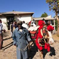 Trotting through Ethiopia: Tedla, the old gent in the photo on the left leading a caparisoned Simien horse/pony, is one of Nic's old rangers, now in his 80s, who is attending a reception for Nic in Debarek.   C.W. NICOL
