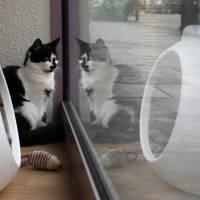 A cat (top) sits next to a toy at Lady Dinah's Cat Emporium in London on March 28, while another one stares out of a window at the cafe. | REUTERS