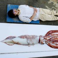 A rare giant squid, caught March 12 near Yokosuka, Kanagawa Prefecture, is displayed next to a man to show how long it is. | KEIKYU ABURATSUBO MARINE PARK / KYODO
