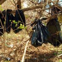 Plastic bags containing the remains of dead cats hang from a tree in a wooded area of Yonkers, New York, on Thursday. | AP