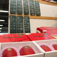 Mangoes sold under the Taiyo no Tamago (Egg of the Sun) label are displayed for the season's first auction in the city of Miyazaki on Thursday. | KYODO