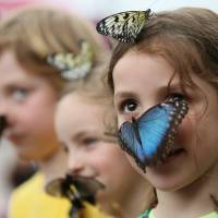 A girl looks at photographers as a large butterfly lands on her face, as she and other children take part in an new exhibition on tropical butterflies outside the Natural History Museum in London on March 31. According to British government statistics, more than a million children in England do not use English as their first language.   AP