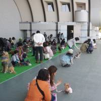Improving a dog's life: Owners learn how to train their puppies to sit and stay at the 'Wan Wan Carnival in Yoyogi Park.