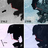 Satellite images of the retreating and advancing Vanderford Glacier, Wilkes Basin, East Antarctica, in relation to its terminus in 1963 (denoted by the red line). | USGS EARTH RESOURCES OBSERVATION SCIENCE CENTER