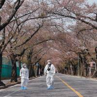 A married couple wearing protective gear and masks walks beneath the cherry trees in the town of Tomioka, Fukushima Prefecture, in April. | AP