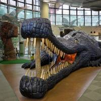 Belly of the beast: Children can run through, and climb, a model of a giant Toyotamaphimeia, a large ancestor of the crocodile that lived in Japan 400,000 years ago.   | JASON JENKINS