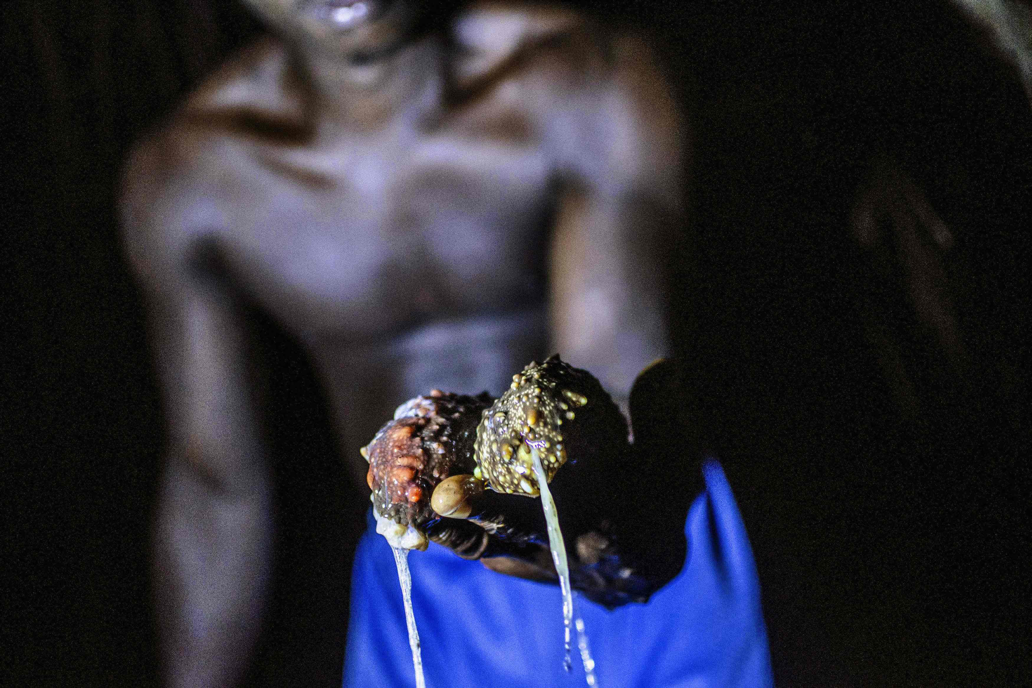 African commodity: A collector holds two sea cucumbers in Dublin, Sierra Leone, in January. The lowly sea cucumber, a fleshy, sausage-shaped creature that scavenges for food on the seabed, is prized in China for its medicinal properties and as a natural aphrodisiac. | REUTERS