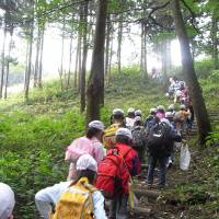 Living legacy: Students take a trip around Sanden Forest, opened in 2002 alongside the Sanden Corp. Akagi Industrial Plant as a way to offset the effects of the factory on the environment, and the jewel in the company's corporate social responsibility program.   C.W. NICOL