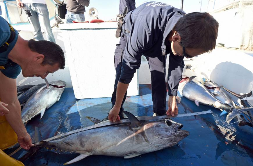 Japan reports world's first bluefin spawning in onshore tank