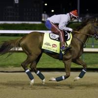The favorite: Exercise rider William Delgado takes Kentucky Derby entrant California Chrome for a morning workout at Churchill Downs Friday in Louisville, Kentucky. | AP