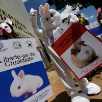 Japan urged to make its cosmetics 'cruelty-free'