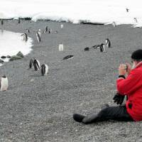 Fragile ecosystem: A tourist takes a photograph of penguins during a visit to the Antarctic in December 2009. | AFP-JIJI