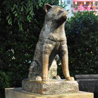 'Hachiko' by Alex used under CC BY 2.0 / image altered