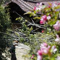 The now-derelict house that was the birthplace of human rights activist Nakae Kariyado in Namie, Fukushima Prefecture, is seen overgrown with vegetation on April 24. | KYODO