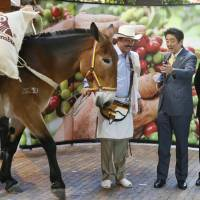Prime Minister Shinzo Abe is surprised to see a mule during a photo session with members of a coffee producers' federation in Bogota on Tuesday.   KYODO