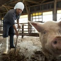 A farmer cleans up a pigpen in Gunma Prefecture in July 2012. | BLOOMBERG