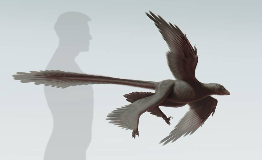 Fossil found of 'four-winged' feathered dinosaur