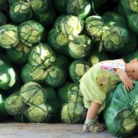 A boy leans on a sack of cabbages at a vegetable wholesale market in Jinan, Shandong province, on Sunday. Some Chinese families are discovering to their alarm that lead poisoning is among the most serious, if least visible, side effects of China's rapid economic growth. | REUTERS
