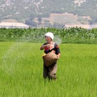 A North Korean farmer spreads fertilizer in a rice field in Sohung county of North Hwanghae province, North Korea, on Thursday. For more than four decades, farming in the North was characterized by heavy use of mechanization swiftly followed by chronic fuel and equipment shortages and stopgap policies. | AP