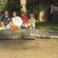 John and Amanda Stokes, brother-in-law Kevin Jenkins and children Savannah and Parker pose with an American alligator measuring 15 feet long and weighing 1,011.5 pounds, a new state record, hauled in from the waters near Millers Ferry, Alabama on Monday. | REUTERS