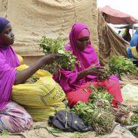 Somali users of amphetamine-like 'paradise flower' khat enjoy low prices after Britain bans its import