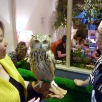A woman holds an owl at Tori no Iru Cafe in Tokyo's Koto Ward, as patrons enjoy food and drinks in an adjacent room. | KYODO