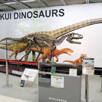 A replica of a Fukuiraptor skeleton is displayed at the Tokyu Hands store in Shibuya Ward, Tokyo. | KYODO