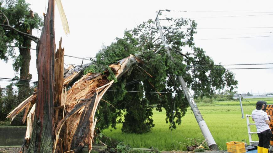 A tree torn down by a gust from Typhoon Halong rests on power lines in Mibu, Tochigi Prefecture, on Sunday. | KYODO
