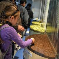 Hands-on: Visitors can touch cacao beans on the Glico tour and run their hands through hops and barley at the Asahi factory. | JASON JENKINS
