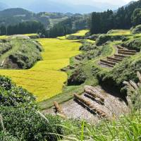 The afternoon sun hits rice paddies ready for harvest near Tsujunkyo aqueduct. | MANDY BARTOK