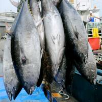 International conference strikes deal to slash bluefin tuna catches