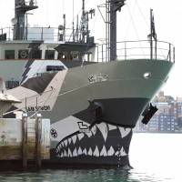 Sea Shepherd, which operates the Sam Simon, said Wednesday it would switch its Antarctic campaign from whales to toothfish if Japan calls off its winter whale hunt this year. | AFP-JIJI
