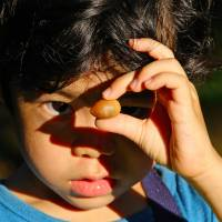 Ryotaro, aged 4, examines an acorn. | KIT NAGAMURA