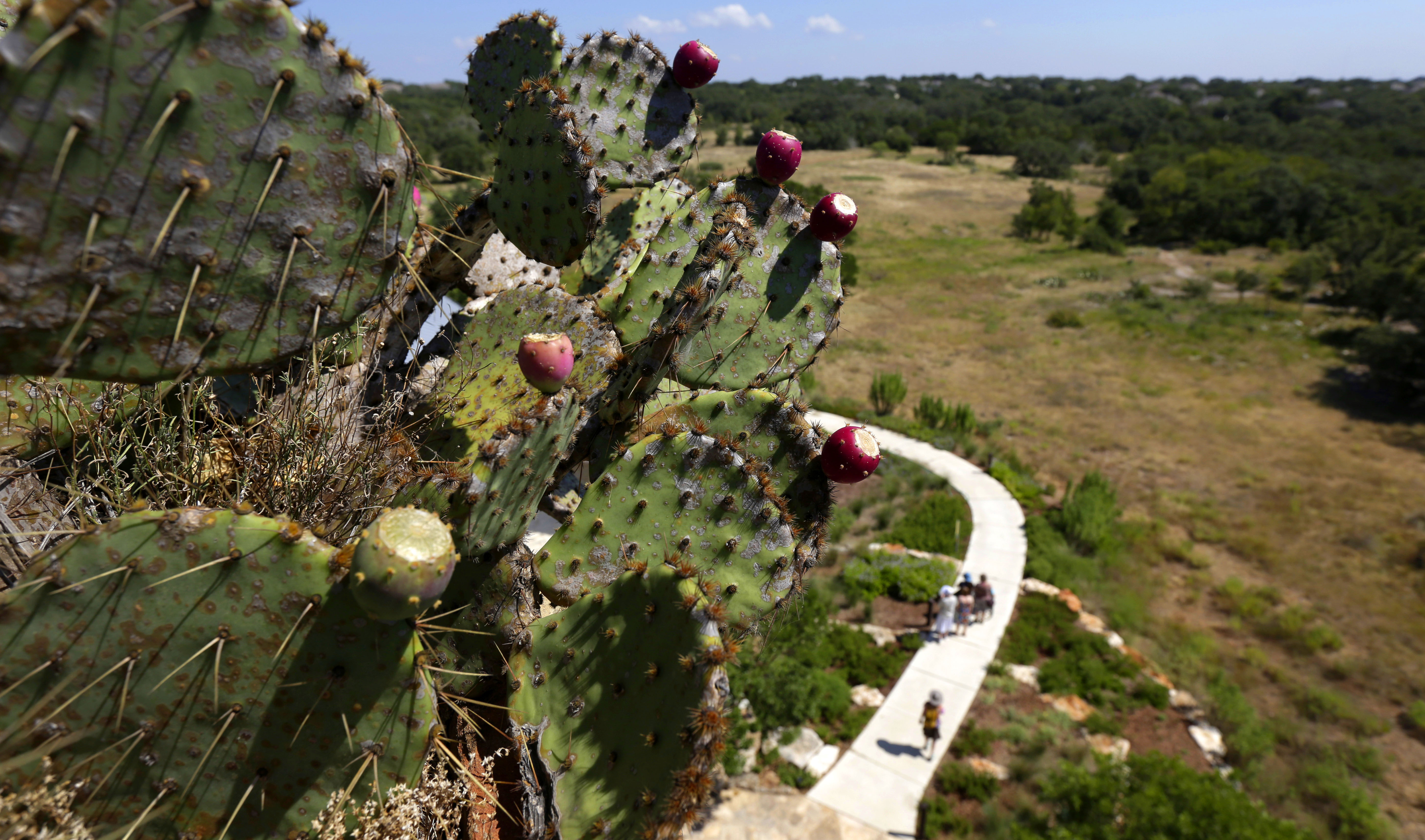 Lady Bird\'s legacy lives on at wildflower center | The Japan Times