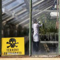 Cannabis plants are checked at the Rovigo farm on Sept. 22. Marijuana for medical use was legalized last year but its high price means few people buy it. | REUTERS