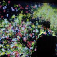 A plethora of flowers in teamLab's interactive installation 'Flowers and People, Cannot be Controlled But Live Together' burst into bloom as a visitor approaches them. | MIO YAMADA