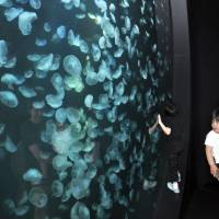 Visitors look at the giant Guinness World Records-cited jellyfish collection at the municipal Kamo Aquarium in Tsuruoka, Yamagata Prefecture, on June 1. | KYODO