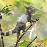 Fossils shed light on origins of mammals
