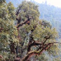 Back to nature: The forest at Jigme Dorji National Park, Bhutan, where a diverse ecosystem is considered consummate with happiness. | MIDORI PAXTON