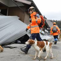 Rescue workers use a sniffer dog to search a damaged house in the village of Hakuba, Nagano Prefecture, on Sunday. A magnitude-6.7 earthquake rocked northern parts of the prefecture on Saturday night, injuring 39 people.   KYODO