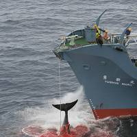 a debate on the ban against hunting whales with focus on japan Whaling, hunting whales using harpoons for for and against whaling levels have remained stagnant since the hunting ban on them in.